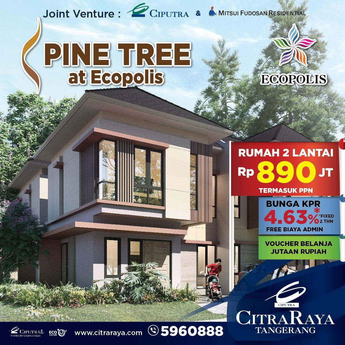 Cluster Pine Tree